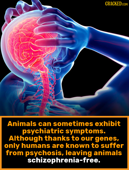 CRACKEDCOR Animals can sometimes exhibit psychiatric symptoms. Although thanks to our genes, only humans are known to suffer from animals schizophleav