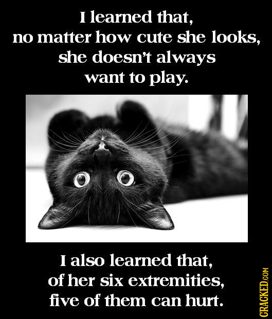 I learned that, no matter how cute she looks, she doesn't always want to play. I also learned that, of her six extremities, five of them can hurt. cRA