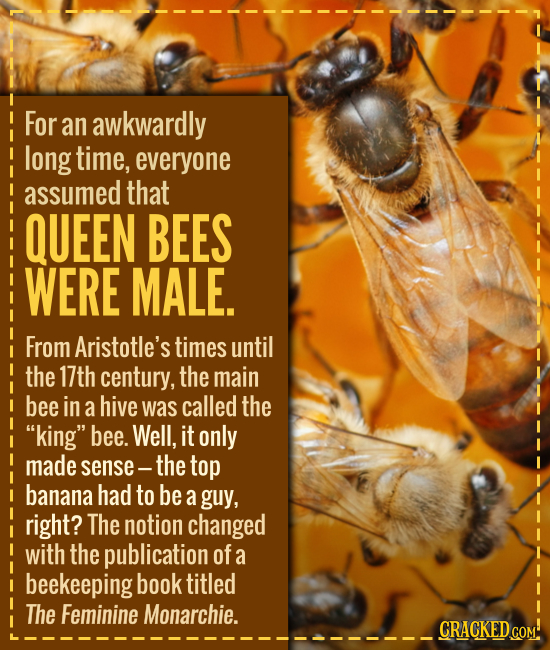 For an awkwardly long time, everyone assumed that QUEEN BEES WERE MALE. From Aristotle's times until the 17th century, the main bee in a hive was call