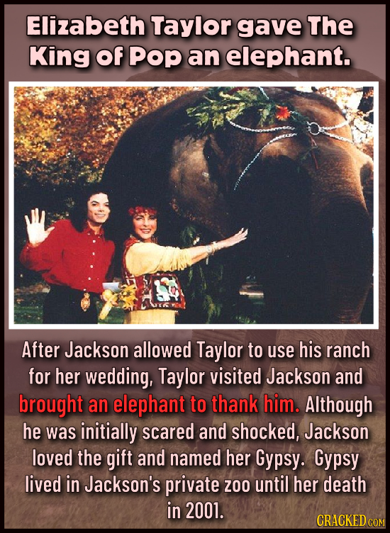 Elizabeth Taylor gave The King Of Pop an elephant. After Jackson allowed Taylor to use his ranch for her wedding, Taylor visited Jackson and brought a