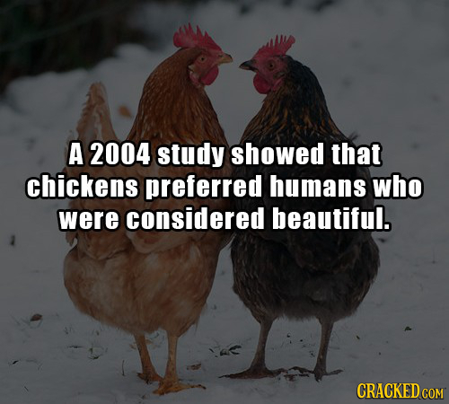 A 2004 study showed that chickens preferred humans who were considered beautiful.