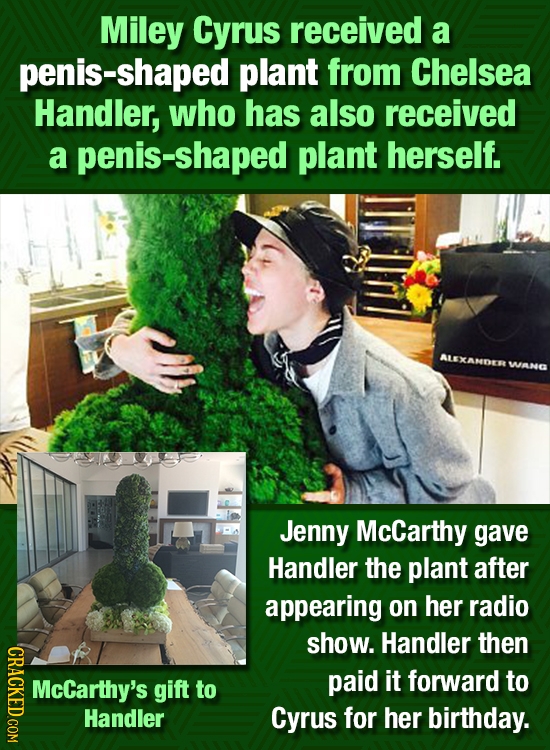 Miley Cyrus received a penis-shaped plant from Chelsea Handler, who has also received a penis-shaped plant herself. ALEXAMDER WANG Jenny McCarthy gave