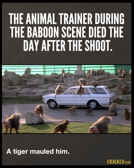 THE ANIMAL TRAINER DURING THE BABOON SCENE DIED THE DAY AFTER THE SHOOT. A tiger mauled him. CRACKED.COM