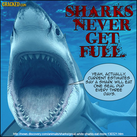 SHRKS NEVER GET FULL YEAH, ACTUALLY, CURRENT ESTIMATES SAY A SHARK WILL EAT ONE SEAL pup EVERY THREE DAYS. lhewsdscoveycomanimalsishaksoreawhieshatkse