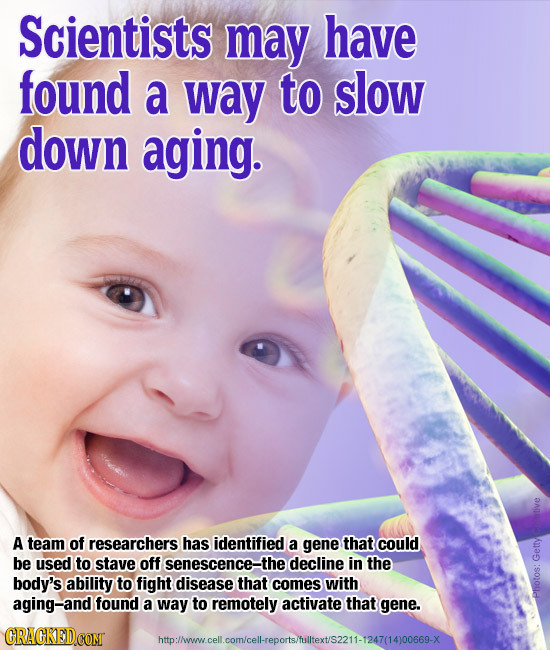 Scientists may have found a way to slow down aging. A team of researchers has identified a gene that could be used to stave off senescence-the decline