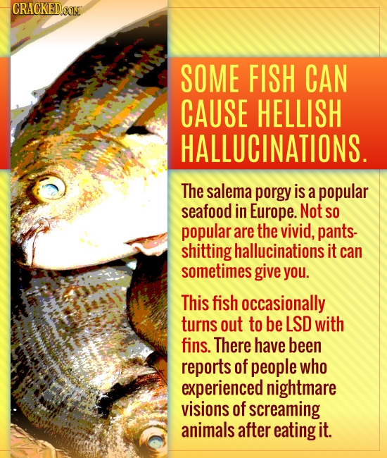 CRACKED.COMT SOME FISH CAN CAUSE HELLISH HALLUCINATIONS. The salema porgy is a popular seafood in Europe. Not SO popular are the vivid, pants- shittin