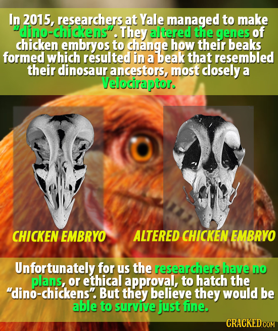 In 2015, researchers at Yale managed to make dino-chickensi. They altered the genes of chicken embryos to change how their beaks formed which resulted