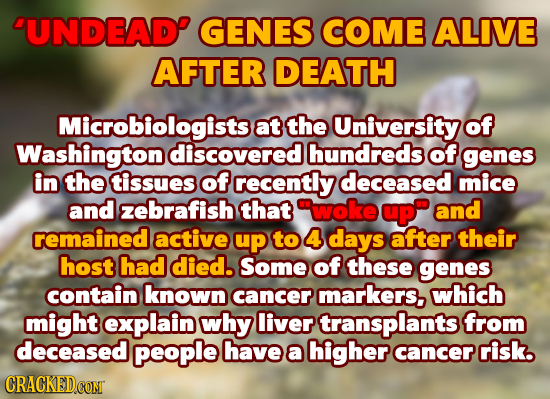 DUNDEAD GENES COME ALIVE AFTER DEATH Microbiologistse at the University of Washington discovered hundreds of genes in the tissues of recently deceased