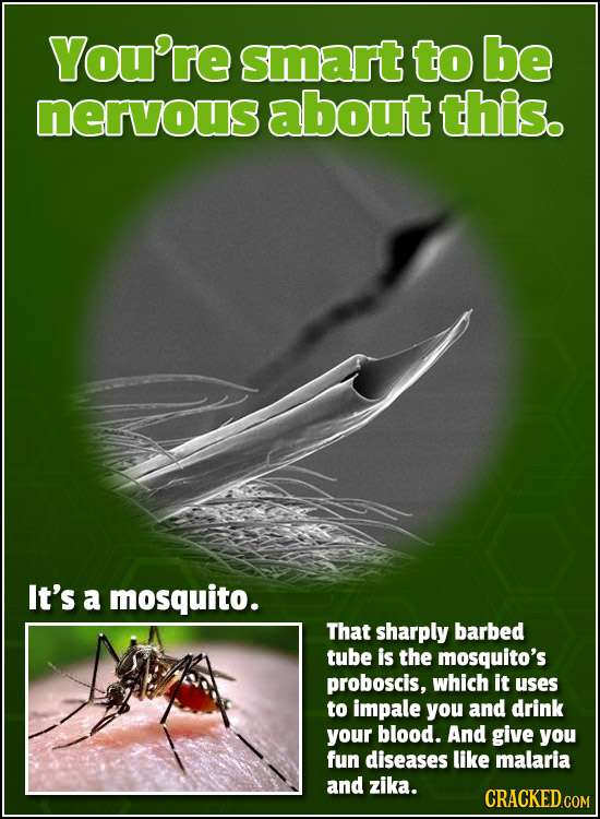 You're smart to be nervous about this. It's a mosquito. That sharply barbed tube is the mosquito's proboscis, which it uses to impale you and drink yo