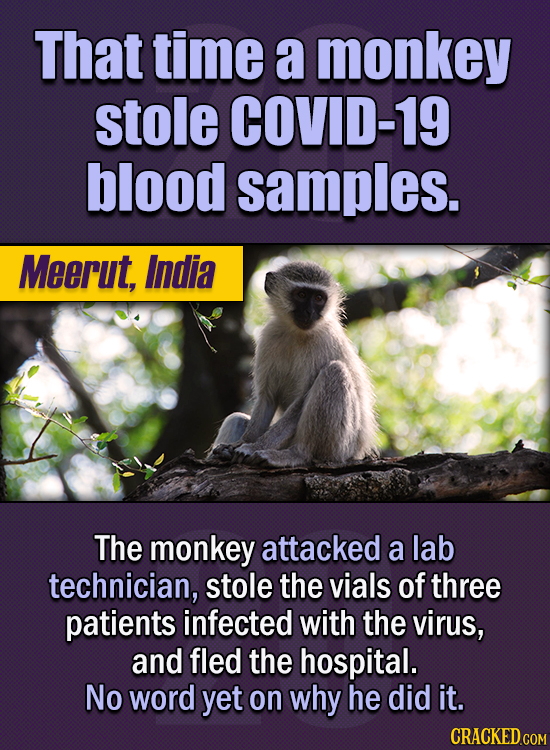 15 Of The Strangest Things 2020 Managed To Cook Up  (Part 1) - That time a monkey stole COVID-19 blood samples. The monkey attacked a lab technician,