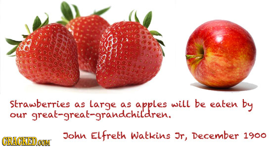 aners Strawberries as large as apples as will be as eaten by our John ELfreth Watkins Jr, December 1900 CRACKED