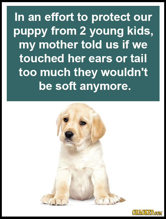 In an effort to protect our puppy from 2 young kids, my mother told us if we touched her ears or tail too much they wouldn't be soft anymore. CRACKEDO
