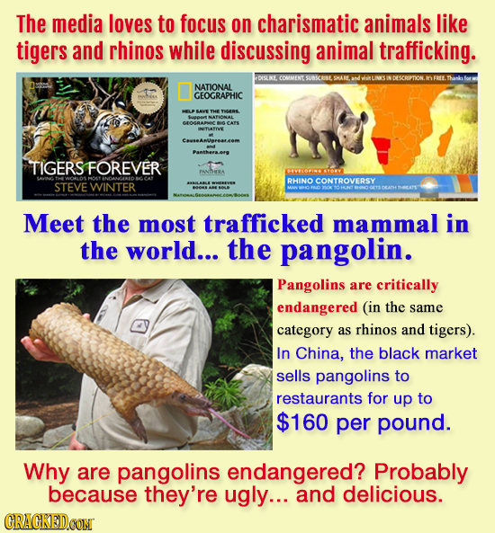 The media loves to focus on charismatic animals like tigers and rhinos while discussing animal trafficking. DISLKE COMIMENC SUBSCAISE STHAB NDESCRIPTI