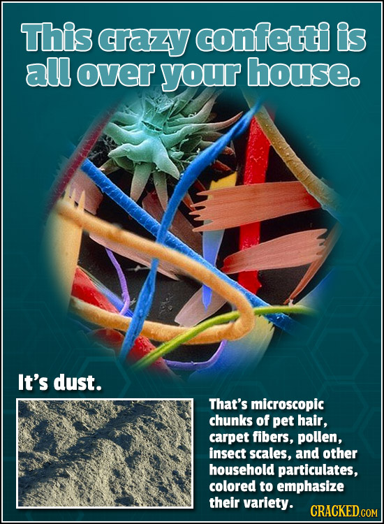 This crazy confetti is all over your house. It's dust. That's microscopic chunks of pet hair, carpet fibers, pollen, insect scales, and other househol