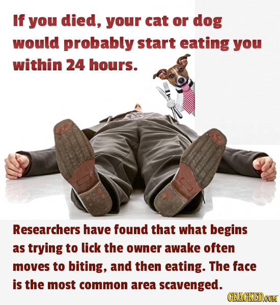If you died, your cat or dog would probably start eating you within 24 hours. Researchers have found that what begins as trying to lick the owner awak