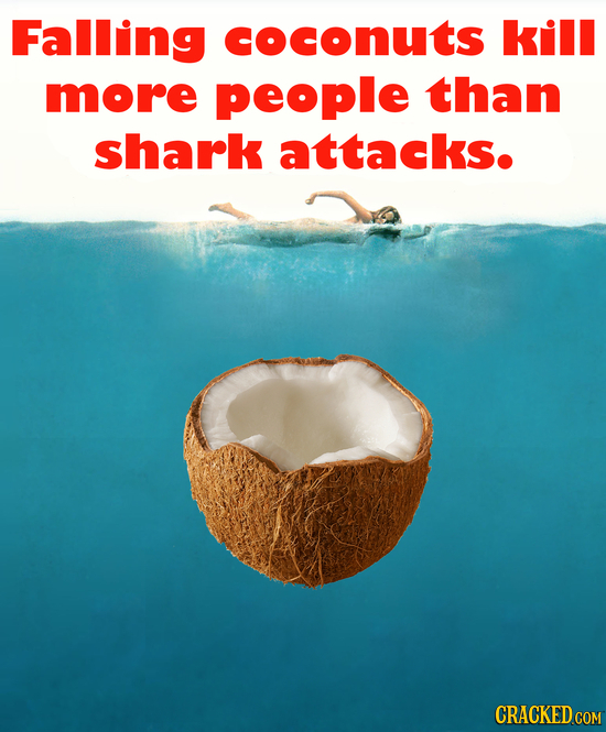 Falling coconuts kill more people than shark attacks.
