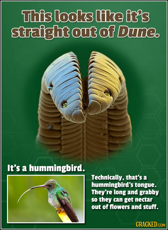 This looks like it's straight out of Duneo It's a hummingbird. Technically, that's a hummingbird's tongue. They're long and grabby so they can get nec