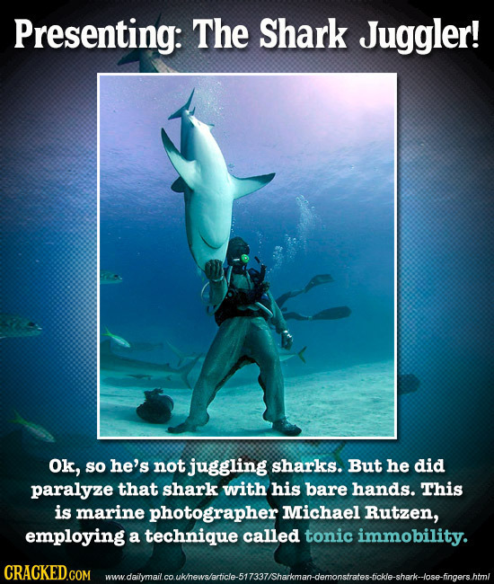 Presenting: The Shark Juggler! Ok, so he's not juggling sharks. But he did paralyze that shark with his bare hands. This is marine photographer Michae