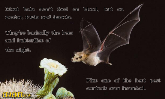 Most bats don't feed on blood, but on nectaro fruits and insects. They're basically the bees and butterflies of the night. Plus one of the best pest c