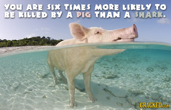 you ARE SIX TIMES MORE LIKELY TO BE KILLED BY A PIG THAN A SHARK.