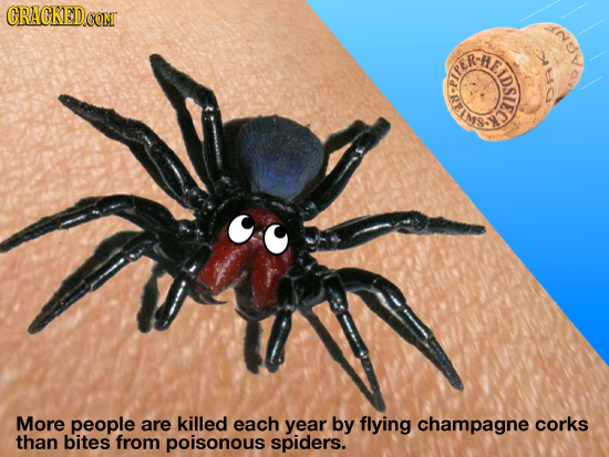CRACKED CONT RE so SREIE LDSIEC More people are killed each year by flying champagne corks than bites from poisonous spiders.