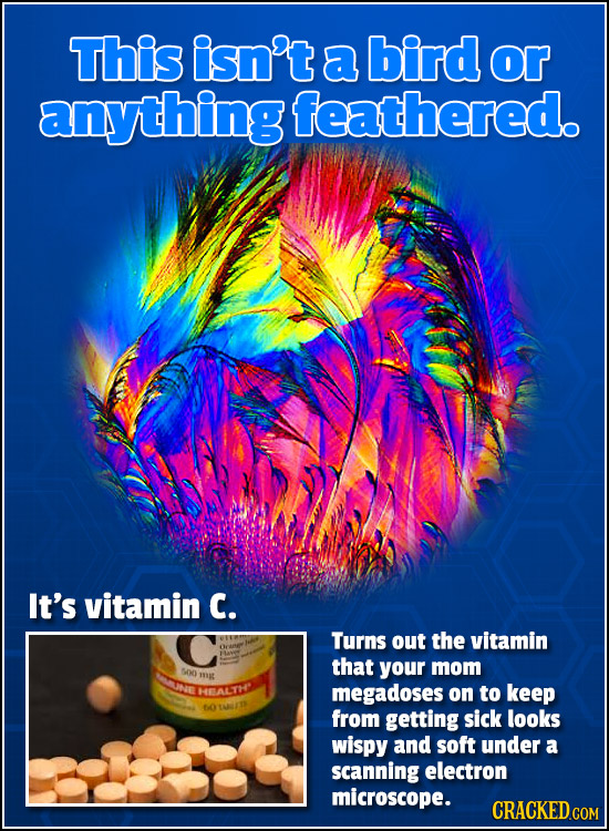 This isn't a bird or anything feathered. It's vitamin C. Turns out the vitamin that your mom 50 N mg REALLTH megadoses on to keep 60 from getting sick