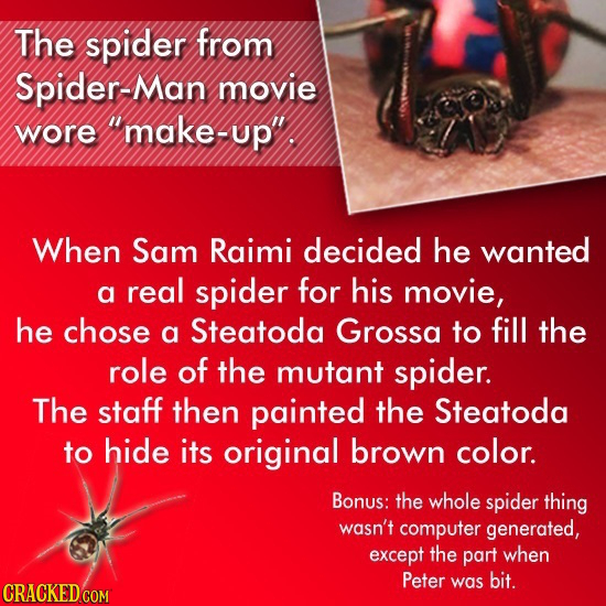 The spider from Spider-Man movie wore make-up When Sam Raimi decided he wanted a real spider for his movie, he chose a Steatoda Grossa to fill the r