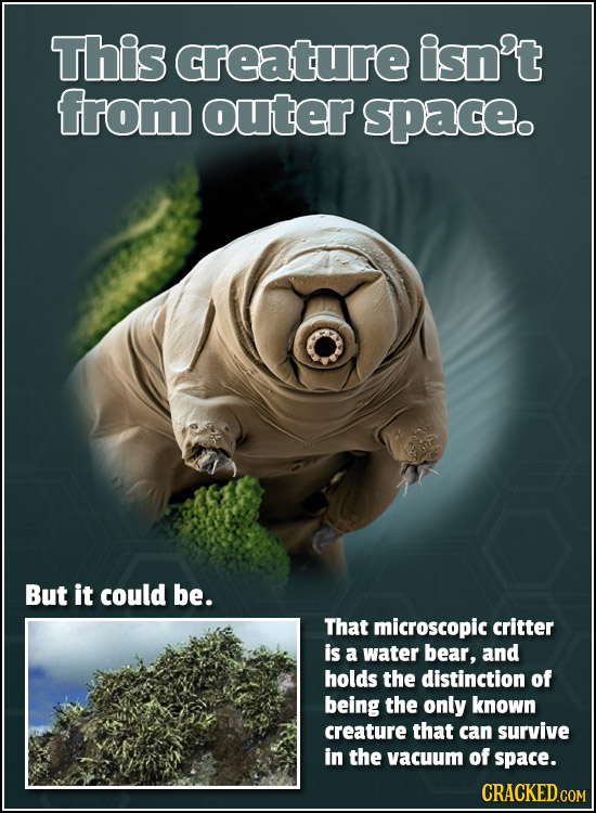 This creature isn't from outer space. But it could be. That microscopic critter is a water bear, and holds the distinction of being the only known cre