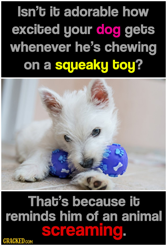 Isn't it adorable how excited your dog gets whenever he's chewing on a squeaky toy? That's because it reminds him of an animal screaming.