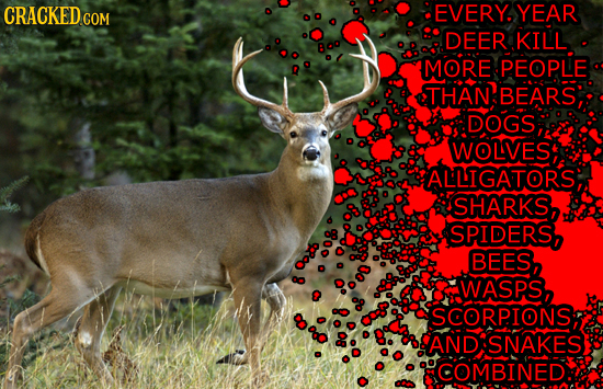 CRACKEDcO EVERY. YEAR COM DEER KILL MORE PEOPLE THAN BEARS DOGS WOLVES ALLIGATORS; SHARKS, SPIDERS, BEES, O WASPS, 8 SCORP.IONS, AND SNAKES COMBINED