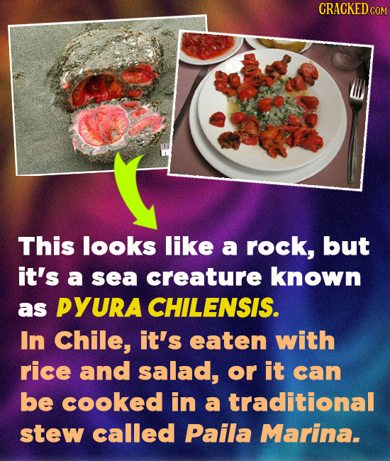 CRACKEDC COM This looks like a rock, but it's a sea creature known as PYURA CHILENSIS. In Chile, it's eaten with rice and salad, or it can be cooked i