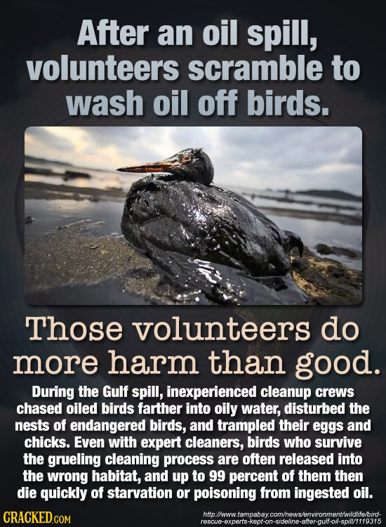 After an oil spill, volunteers scramble to wash oil off birds. Those volunteers do more harm than good. During the Gulf spill, inexperienced cleanup c