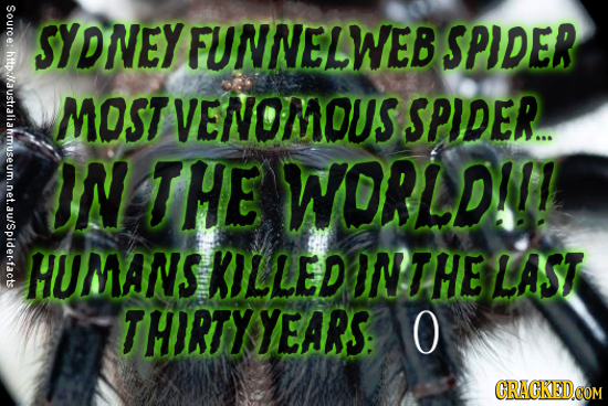 Source: Source: hftp:/australiam SYDNEYFUNNELWEB SPIDER MOST VENOMOUS SPIDER. IN THE WORLDI! HUMANS KILLED INTHE LAST THIRTY YEARS: O