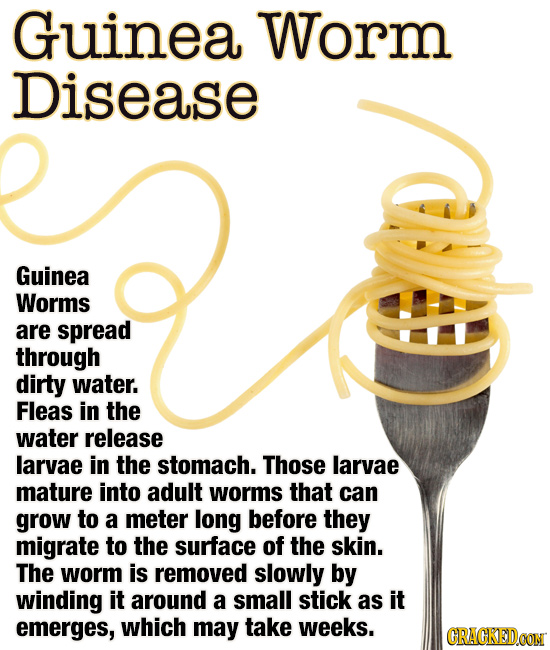 Guinea Worm Disease Guinea Worms are spread through dirty water. Fleas in the water release larvae in the stomach. Those larvae mature into adult worm