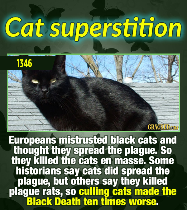 15 Tiny Things With Mind-Blowing Global Consequences - Europeans mistrusted black cats and thought they spread the plague. So they killed the cats en