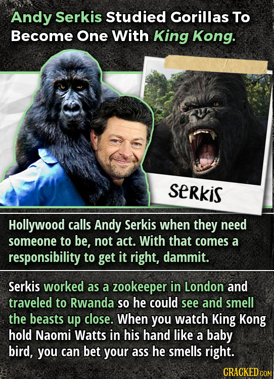 Andy Serkis Studied Gorillas To Become One With King Kong. SeRkis Hollywood calls Andy Serkis when they need someone to be, not act. With that comes a