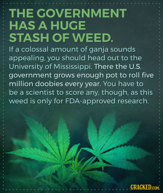THE GOVERNMENT HAS A HUGE STASH OF WEED. If a colossal amount of ganja sounds appealing, you should head out to the University of Mississippi. There t