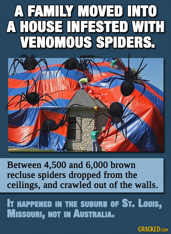 A FAMILY MOVED INTO A HOUSE INFESTED WITH VENOMOUS SPIDERS. Between 4, 500 and 6,000 brown recluse spiders dropped from the ceilings, and crawled out