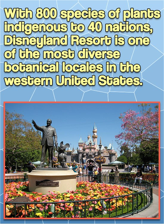 With 800 species of plants indigenous to 40 nations, Disneyland Resort is one of the most diverse botanical locales in the western United States.