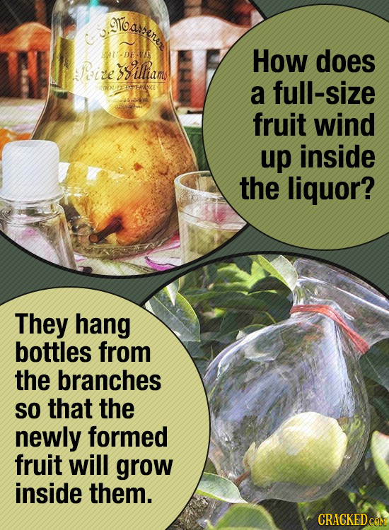 loaenes U-DEVN How does Peize siltiam OUETAERINCE a full-size fruit wind up inside the liquor? They hang bottles from the branches SO that the newly f
