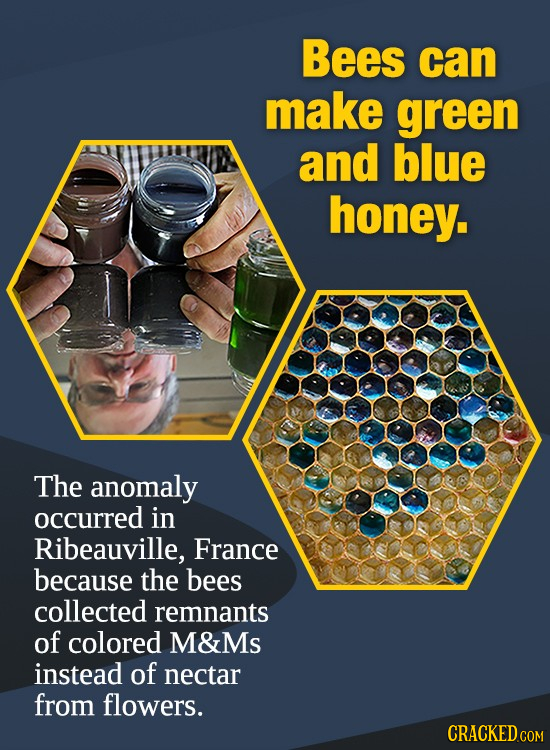 Bees can make green and blue honey. The anomaly occurred in Ribeauville, France because the bees collected remnants of colored M&Ms instead of nectar