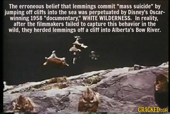The erroneous belief that lemmings commit mass suicide by jumping off cliffs into the sea was perpetuated by Disney's Oscar- winning 1958 documenta