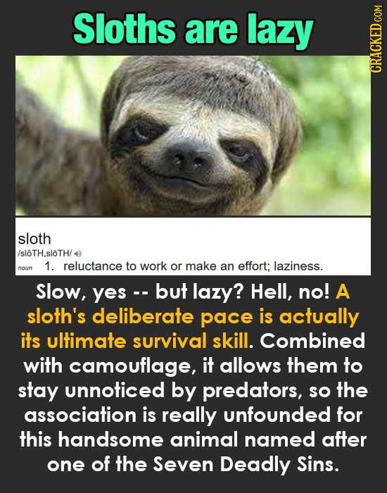 Sloths are lazy CRACKED.COM sloth /sloTH.sloTH/ 1. reluctance to work or make an effort; laziness. noun Slow, yes-. but lazy? Hell, no! A sloth's deli