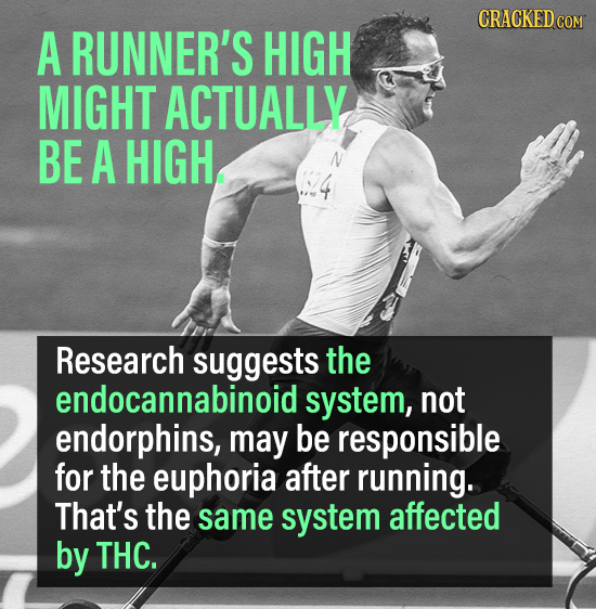 CRACKED COM A RUNNER'S HIGH MIGHT ACTUALLY BE A HIGH Research suggests the endocannabinoid system, not endorphins, may be responsible for the euphoria