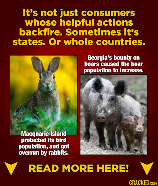 It's not just consumers whose helpful actions backfire. Sometimes it's states. Or whole countries. Georgia's bounty on boars caused the boar populatio
