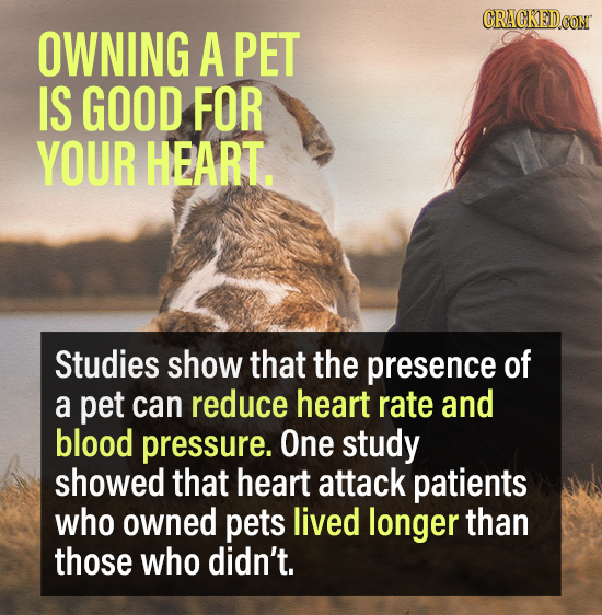 CRACKEDCON OWNING A PET IS GOOD FOR YOUR HEART. Studies show that the presence of a pet can reduce heart rate and blood pressure. One study showed tha