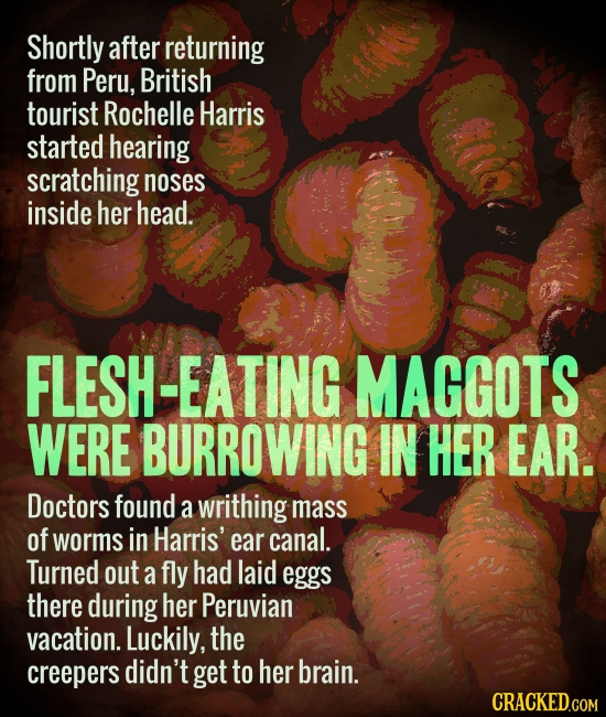 Shortly after returning from Peru, British tourist Rochelle Harris started hearing scratching noses inside her head. FLESH-EATING MAGGOTS WERE BURROWI