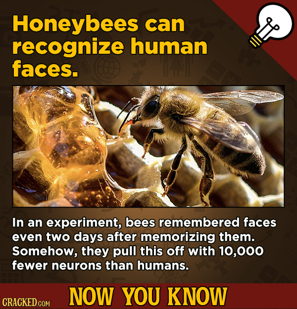 13 Movie-Related And Other Facts You Had No Clue About --Honeybees can recognize human faces. In an
