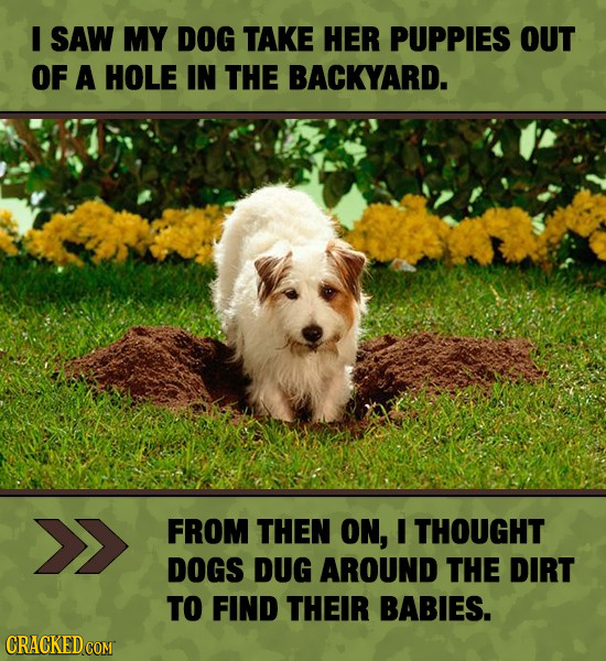I SAW MY DOG TAKE HER PUPPIES OUT OF A HOLE IN THE BACKYARD. FROM THEN ON, I THOUGHT DOGS DUG AROUND THE DIRT TO FIND THEIR BABIES.