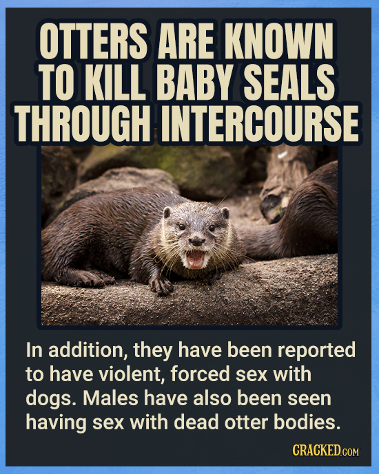 OTTERS ARE KNOWN TO KILL BABY SEALS THROUGH INTERCOURSE In addition, they have been reported to have violent, forced sex with dogs. Males have also be